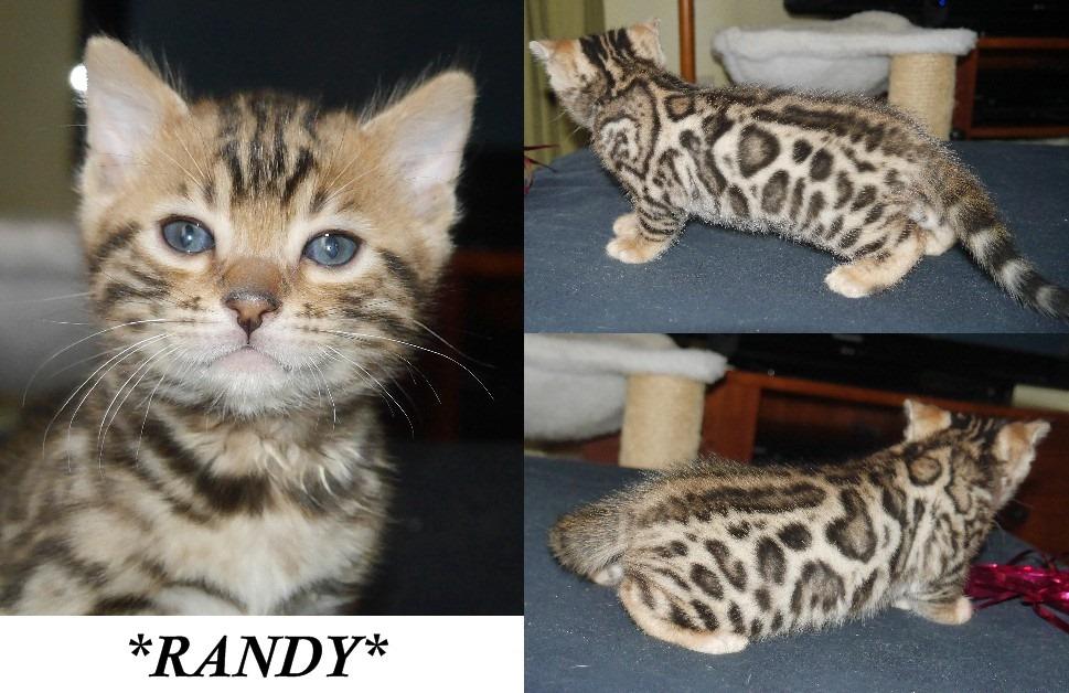 Randy 5 Weeks