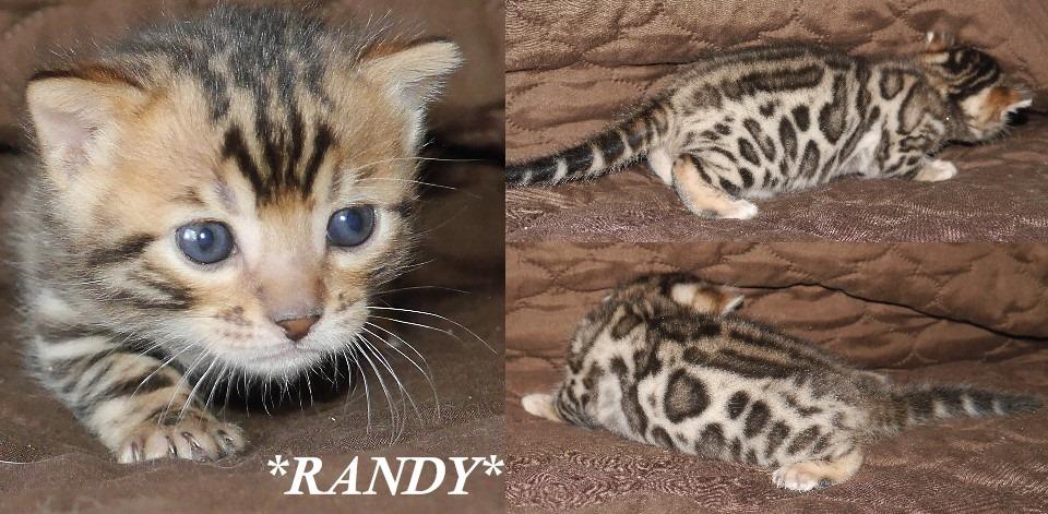 Randy 3 Weeks