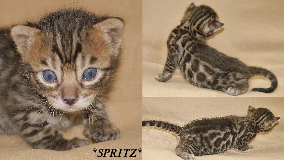 Spritz 3 Weeks