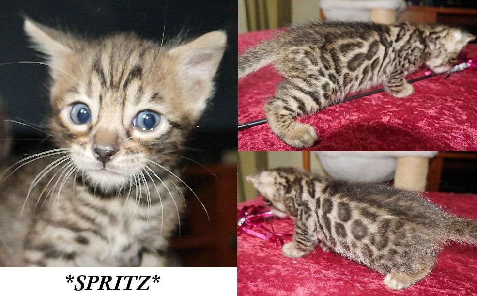 Spritz 4 Weeks