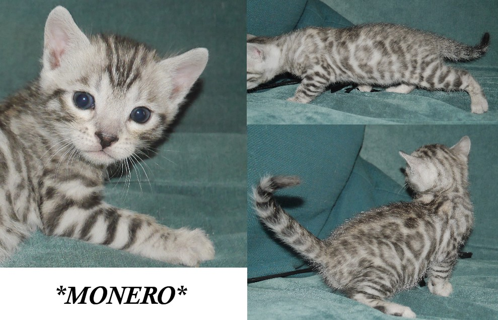 Monero 4 Weeks