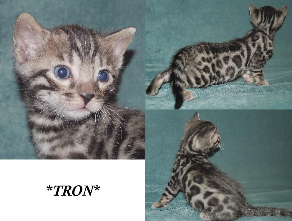Tron 4 Weeks