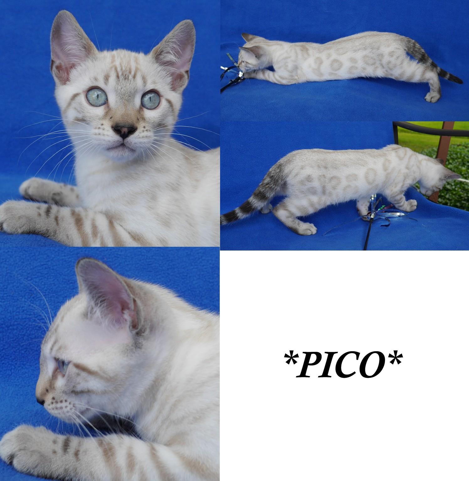 Pico 12 Weeks