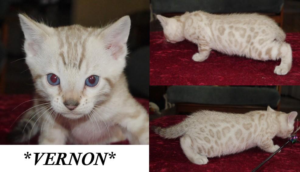 Vernon 5 Weeks