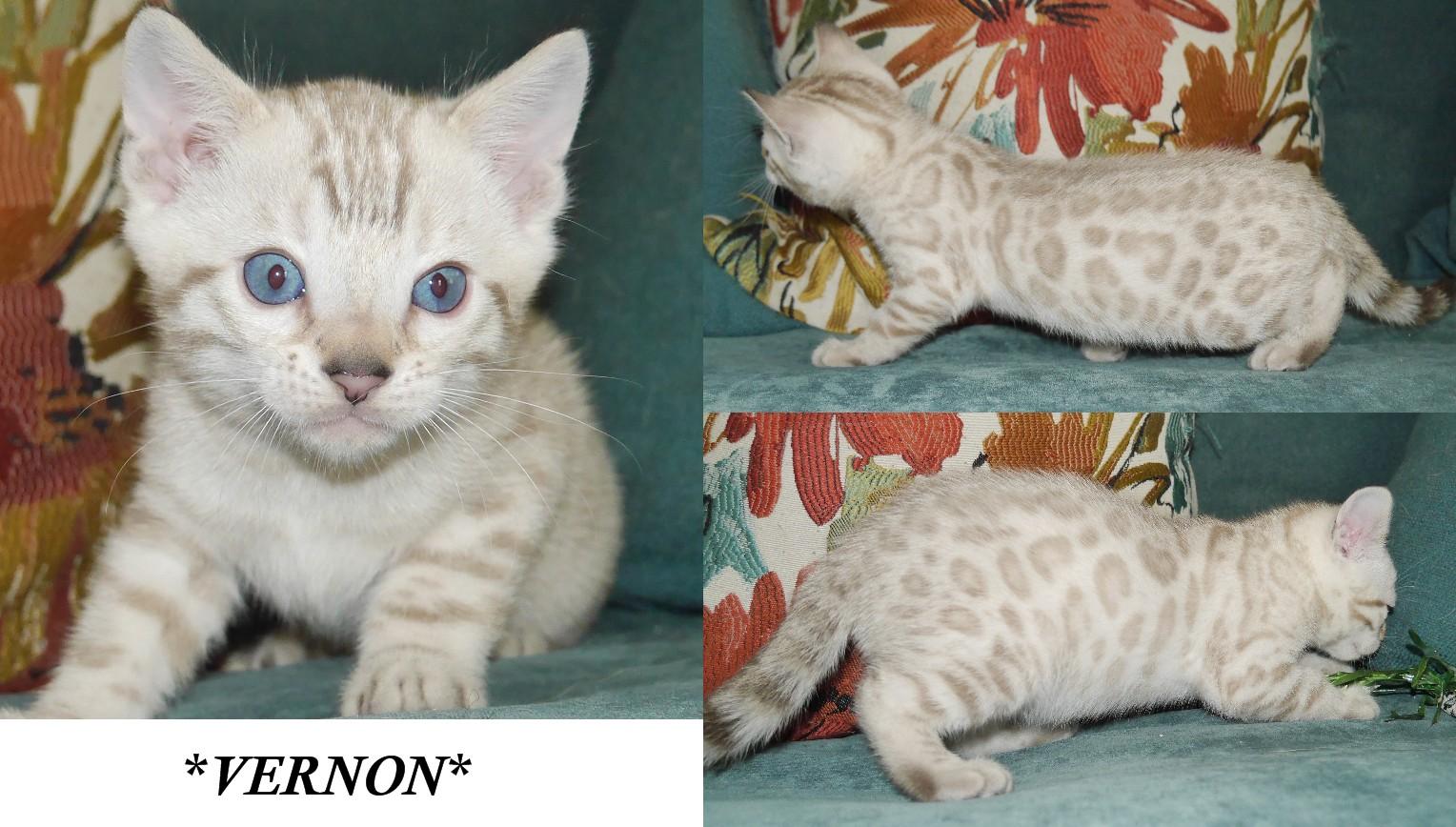 Vernon 6 Weeks