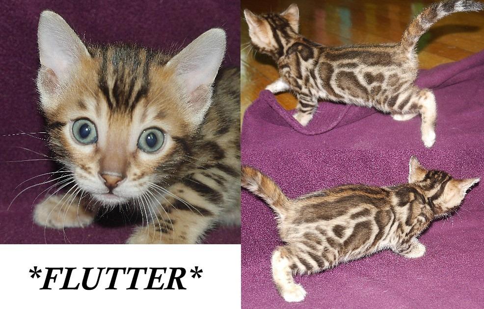 Flutter 4 Weeks