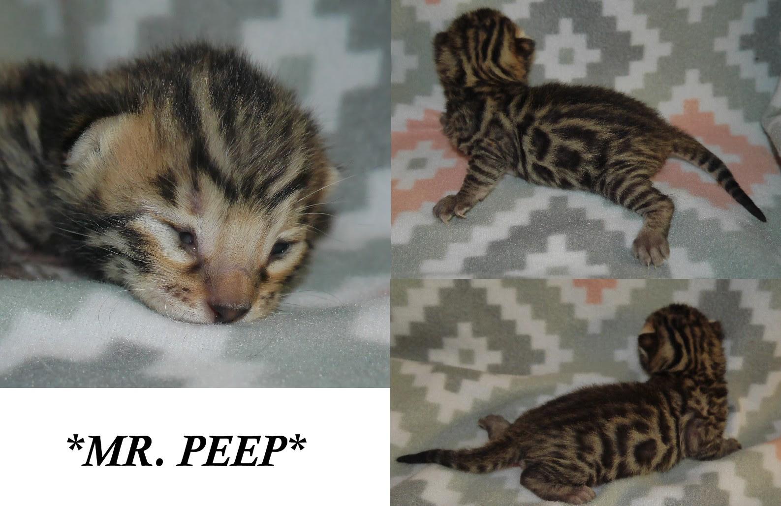Mr Peep 1 Week