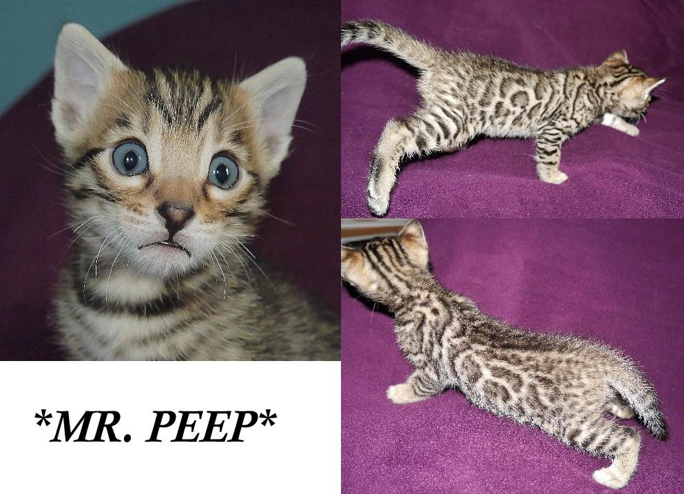 Mr Peep 4 Weeks