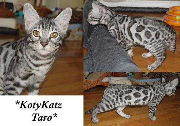 Taro 18 Weeks