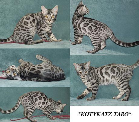 Taro 5.5 Months