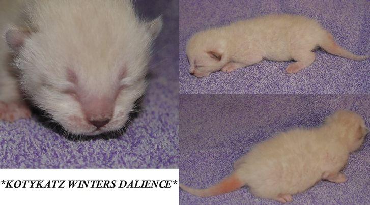 Winters Dalience 1 Week