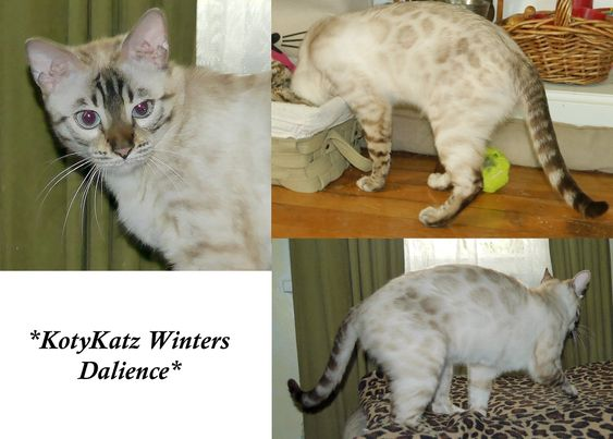 Winters Dalience 1 Year