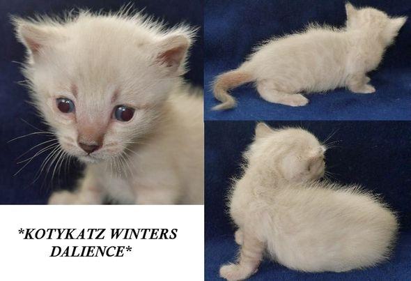 Winters Dalience 3 Weeks