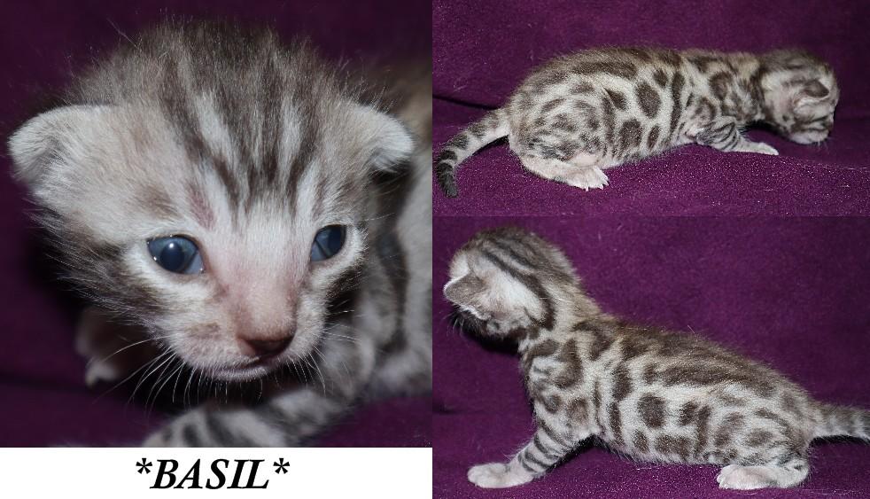 Basil 3 Weeks