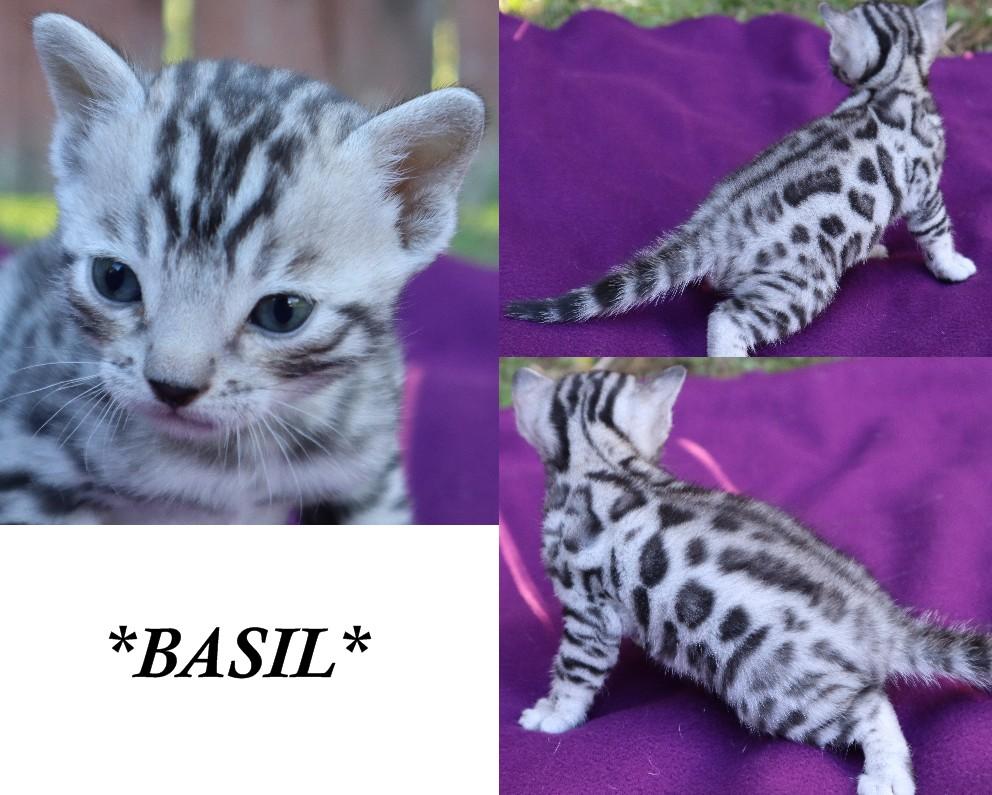 Basil 4 Weeks
