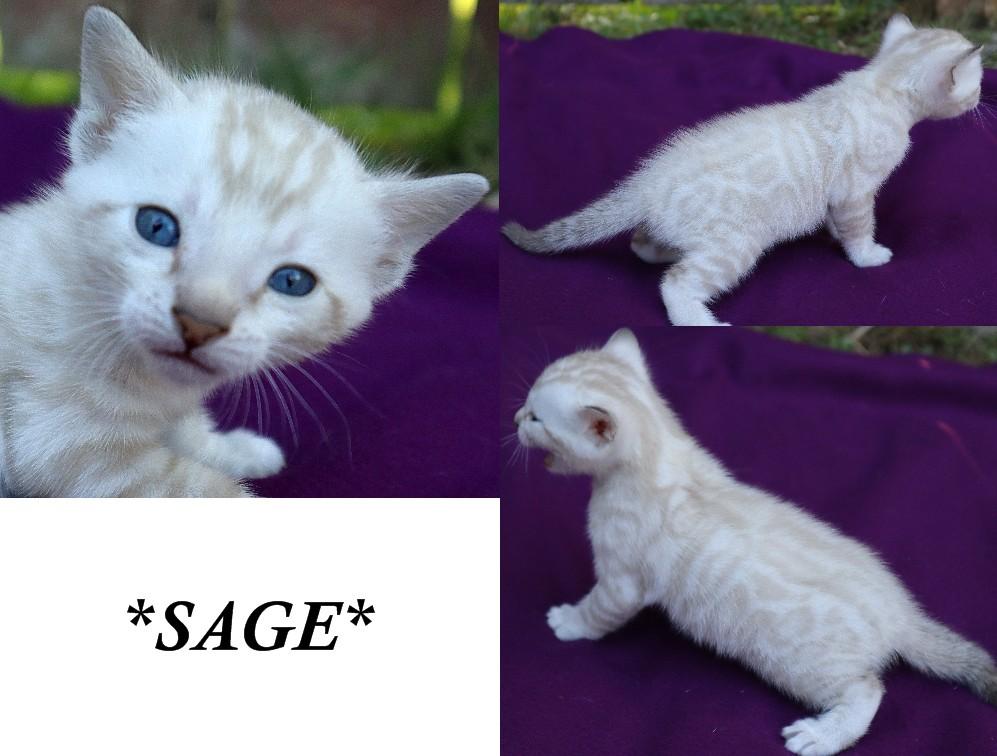 Sage 4 Weeks