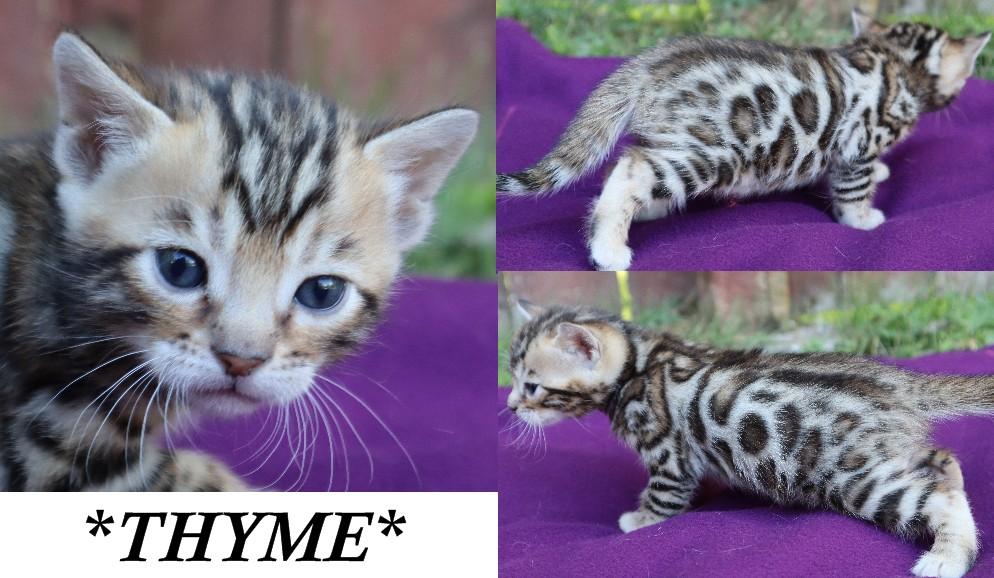 Thyme 4 Weeks