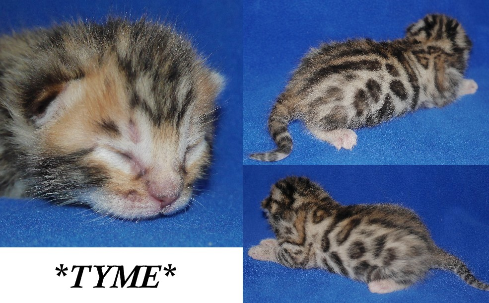 Thyme 1 Week