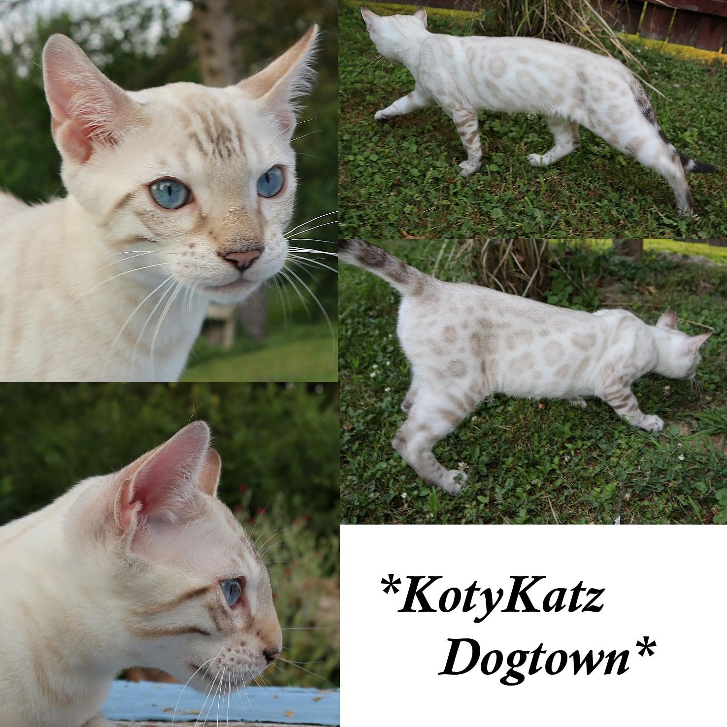 KotyKatz Dogtown 4 Months