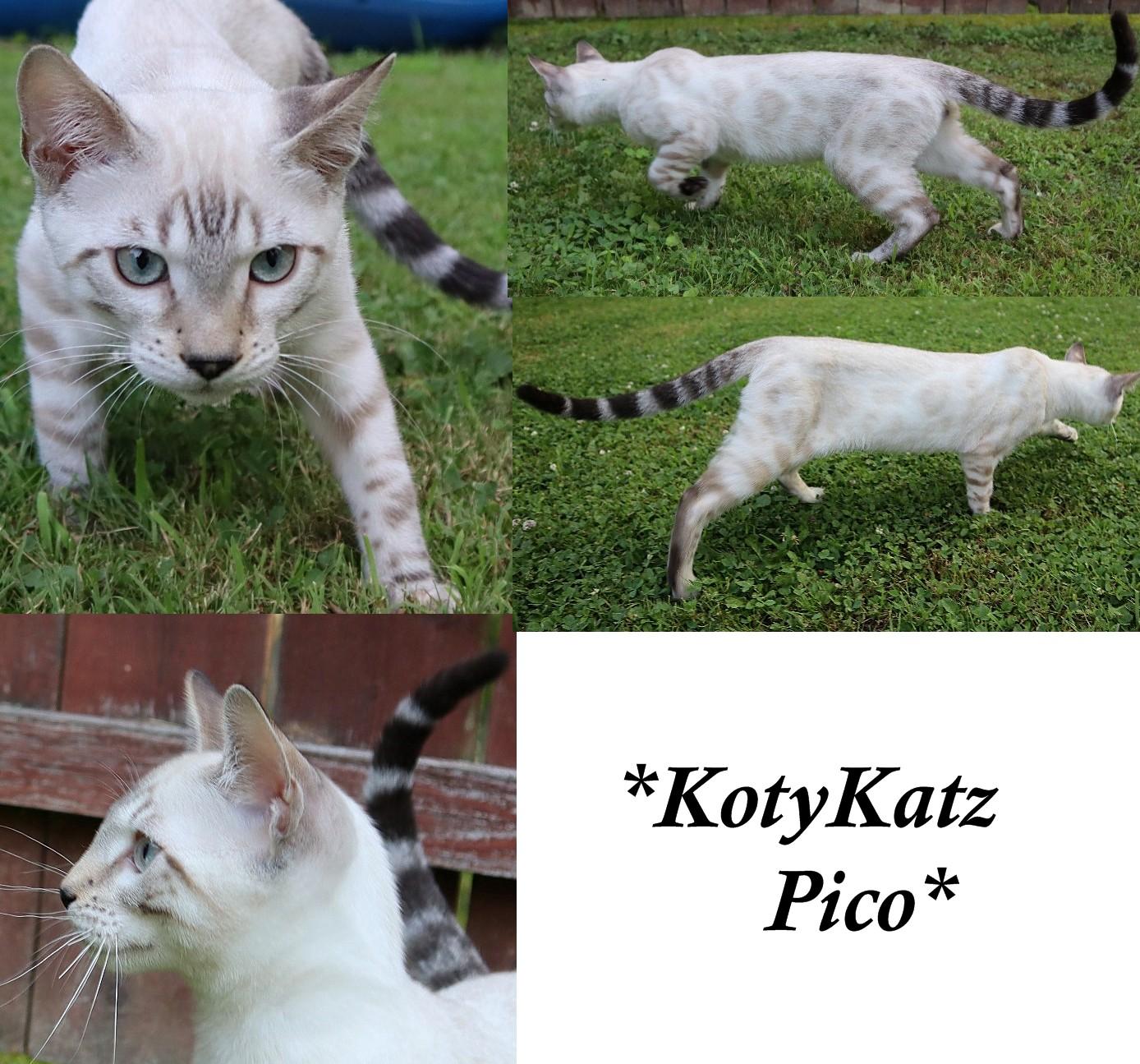 KotyKatz Pico 4 Months