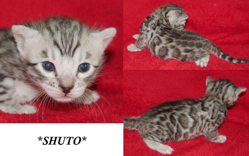 Shuto 3 Weeks