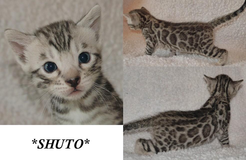 Shuto 4 Weeks