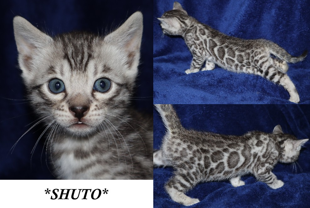 Shuto 5 Weeks