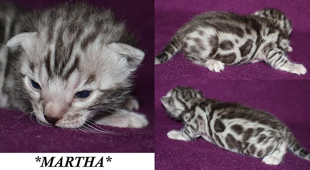 Martha 2 Weeks