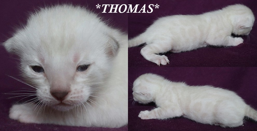 Thomas 2 Weeks